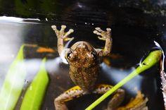 Frosch in einem Eimer versenden?