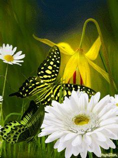Gif Papillons traversant fleurs