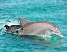 cute baby dolphins swimming - Google Search