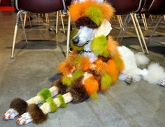 Slideshow of 17 Crazy Pet Grooming Styles - Dog Grooming Competition