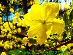Hinh ảnh tranh Tết hoa mai vàng treo phòng khách như mang đến niềm vinh quý trong năm mới