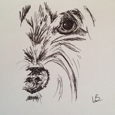 Preliminary pen sketch for full portrait of a mini-schnauzer puppy :) x