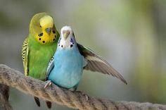 #birdz #parakeet #bluebird #greenbird