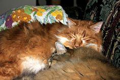 Snuggles by Alaidh, via Flickr  Heidi, Abbie and  Reilly
