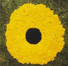 Andy Goldsworthy, Dandelions collected on the way to Bretton laid around a carefully made hole