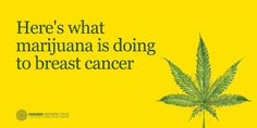 Here's What Marijuana Is Doing To Breast Cancer - #MMJ #BreastCancer - http://www.higherperspectives.com/marijuana-breast-cancer-1467718113.html?xrs=RebelMouse_fb