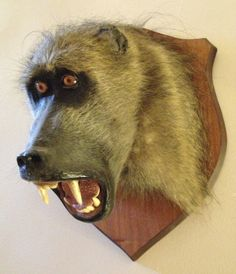 Vintage Taxidermy Baboon Mount