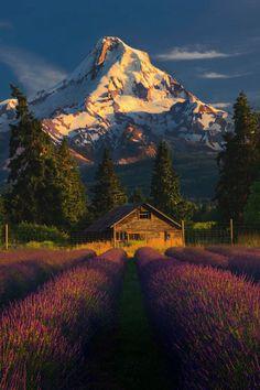 "enantiodromija: "" Mt. Hood by Greg Boratyn """