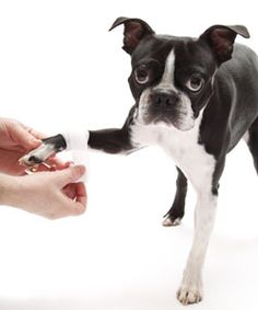 See the most common dog emergencies and dog first-aid remedies.