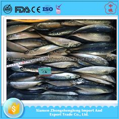 New Land Frozen round scad mackerel with wholesale price.