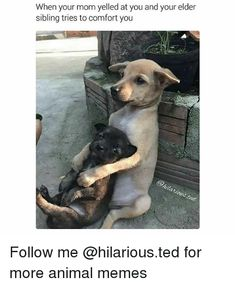 19 Times Animals Had Some Unresolved Issues With Their Mom (Memes)^^ I'm thinking older sibling Sister Quotes Funny, New Funny Memes, Dog Quotes Funny, Super Funny Memes, Cat Memes, Mom Funny, Funny Stuff, Quotes Quotes, Nephew Quotes