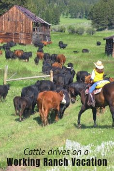 173 Best Working Cattle Ranches images in 2019 | Horses