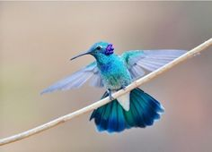 Aren't hummingbird absolutely breath-taking?!