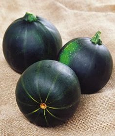 Squash Summer Eight Ball Zucchini | Garden Seeds and Plants