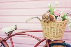 Lean an old bike with a basket against the house and fill if full of shabby chic pink roses.  Puppy is optional...  & I would paint the basket white