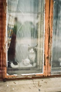 "coisasdetere: ""Kitties in the Window… """