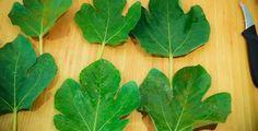 Le foglie che eliminano grasso, rughe e colesterolo, e curano problemi muscolari e diabete