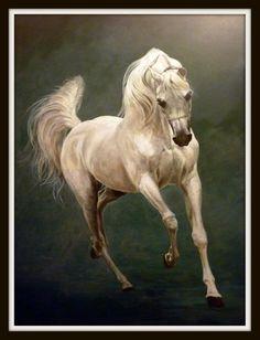 Arab Horse Paintings - Judi Kent Pyrah Equestrian Artist