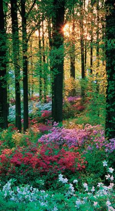 """Colorful and inviting. """" Secret Place""""!!"""