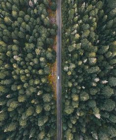 This birds eye view angle of this road emphasizes how the woods surrounds it and the road's size in comparison.
