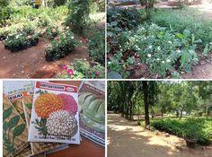 Horticultural Society Chennai - A garden from old Madras!    http://foodbetterbegood.blogspot.com/2013/04/horticultural-society-chennai-garden.html