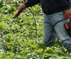 A la recherche de solutions pour lutter contre les limaces qui ravagent mes plans de pommes de - Insecticide savon noir bicarbonate ...