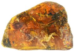 Baby Bird From Time of Dinosaurs Found Fossilized in Amber<---didn't they learn anything from the first Jurassic movie, apparently not.