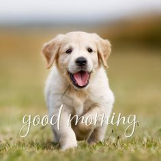 Good morning pic with cute puppy. Good Morning Puppy, Good Morning Animals, Good Morning Picture, Good Morning Flowers, Good Morning Wishes, Good Morning Images, Morning Msg, Morning Coffee, Coffee Break