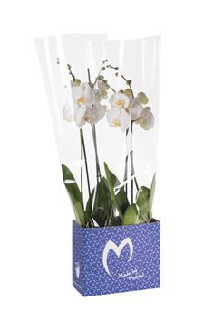 #packaging #potted #plants #orchid