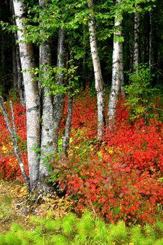✯ Autumn Splendour