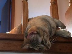 My cat likes to monitor our activity going up and down the stairs