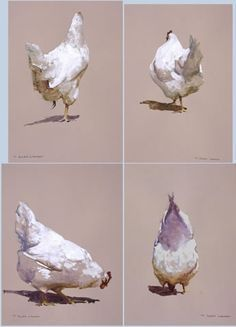 Lawson – Great White Studies Source by laetilegrain Rooster Painting, Rooster Art, Chicken Painting, Chicken Art, Bird Drawings, Animal Drawings, Watercolor Animals, Watercolor Paintings, Watercolour