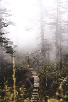 Staircase in the Foggy Woods. Nature Photography.