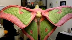 Animatronic Luna-moth wings for awesome costume and flight needs Cool Costumes, Cosplay Costumes, Halloween Costumes, Costume Ideas, Bug Costume, Larp, Moth Wings, Diy Wings, Fantasias Halloween