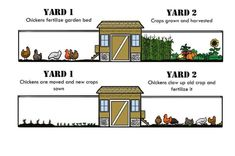 Chicken Coop - Save Time and Energy with the Fenced Chicken Coop/Garden Chicken Coop Garden, Cheap Chicken Coops, Mobile Chicken Coop, Portable Chicken Coop, Best Chicken Coop, Chicken Coop Plans, Building A Chicken Coop, Chicken Runs, Chicken Tractors