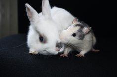 rats <3 bunnies.