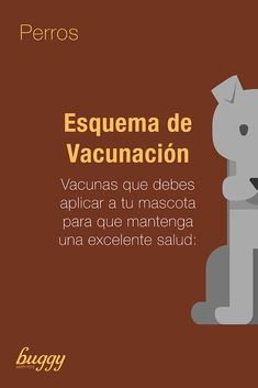 #perros #dogs #doglovers #perrosfelices #vacunacion #healthydogs Dog Lovers, Memes, Dogs, Happy Dogs, Pets, Tips, Health, Animal Jokes, Meme