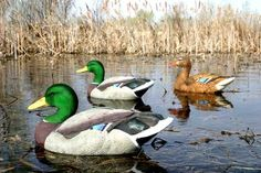 One of our best selling duck decoys, the Dakota Decoy Xtreme Flocked Head Mallard Decoys, 12-Pack - are back in stock, and at prices that cannot be beaten elsewhere. Get a 12 pack for only $133.99