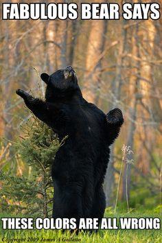I think I may be the fabulous bear...