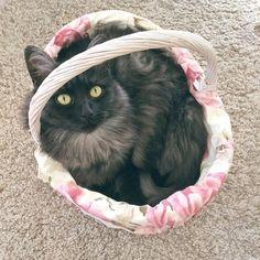 Jeg er kanskje skikkelig dårlig til å oppdatere instagram men katten min er VELDIG flink til det så dere kan følge @olympiakatt istedet