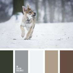 Wolf Pup In a Snow Forest Color Palette Black Color Palette, Neutral Colour Palette, Wolf Colors, Colours, Pantone, Brown Color Schemes, Forest Color, Color Balance, House Colors