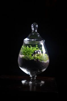 Brandy Snifter Terrarium with Cow by joshleo, via Flickr