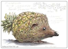 "Hedgehog/Pineapple = Hedgeapple - Mixing vegetables and animals illustration series ""Samples from the Lab"" by Rob Foote, South Africa. Animal Drawings, Pencil Drawings, Art Drawings, Pencil Sketching, Drawing Animals, Realistic Drawings, Fruit Animals, Cute Animals, Art And Illustration"
