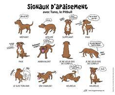 Signaux d'apaisement (version 2).  Les signaux d'apaisement à reconnaître chez votre chien.