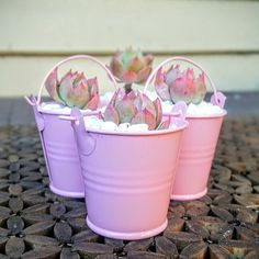 Pink perfection Buy Succulents Online, Cacti And Succulents, Terrarium Plants, Succulent Terrarium, Adult Crafts, Flower Power, Cactus, Etsy Seller, Create