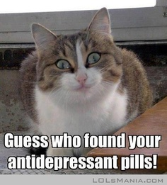 Funny Cat Pics - Guess What I Found