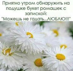 Цитаты про цветы красивые