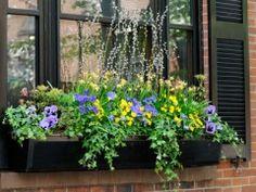 How to choose plants for a window box...c/o Farmer's Almanac!