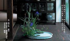2016年06月作品 Japanese Flowers, Ikebana, Iris, Flower Arrangements, Spring, Floral, Plants, Style, Swag