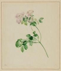 Untitled (Wildflower, JH 64) JOHN HANCOCK (ENGLISH, b. 1757–UNKNOWN) C. 1825